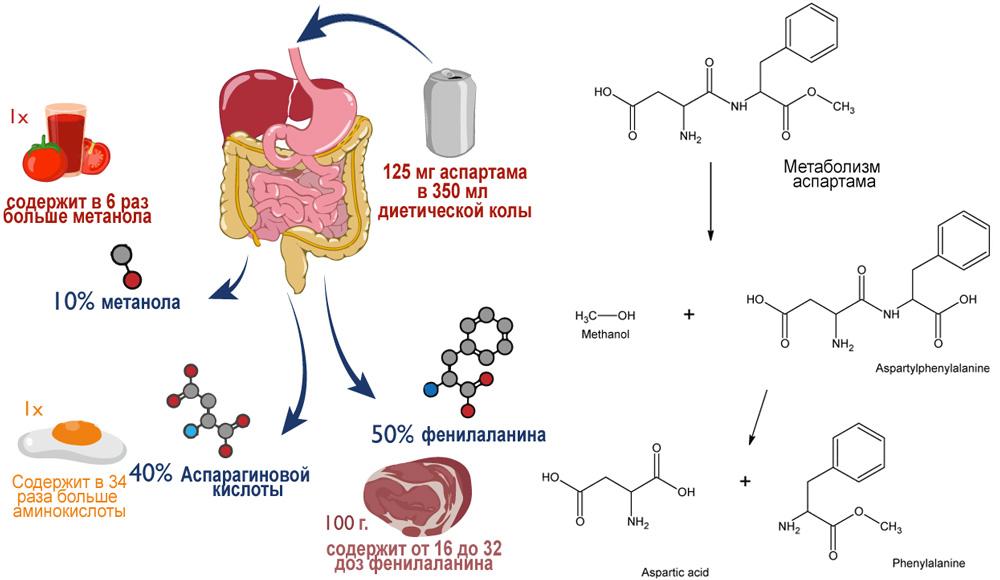 Схема метаболизма добавки Е951 аспартама